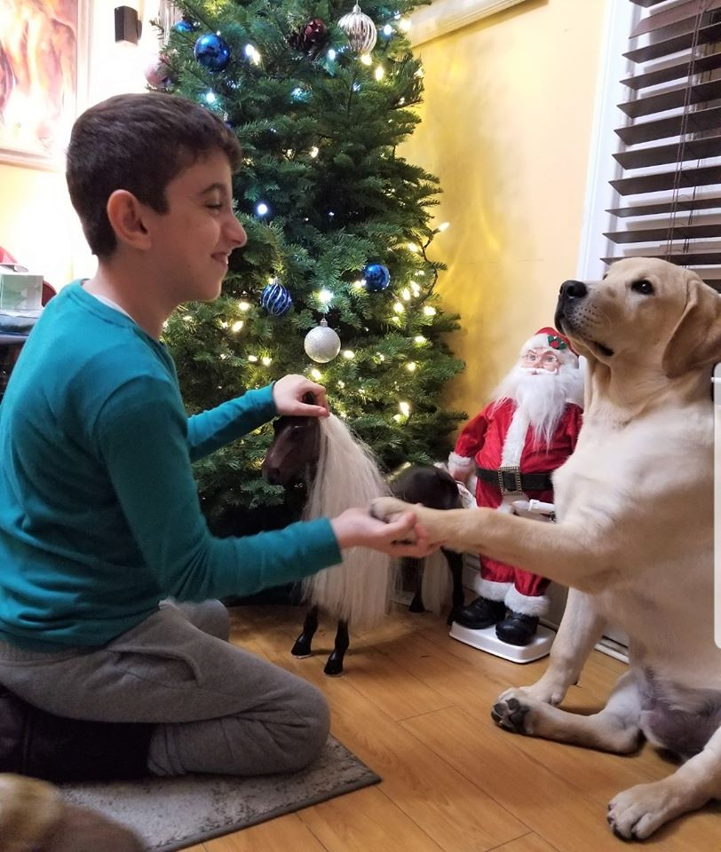 cuteboy with Yellow Lab
